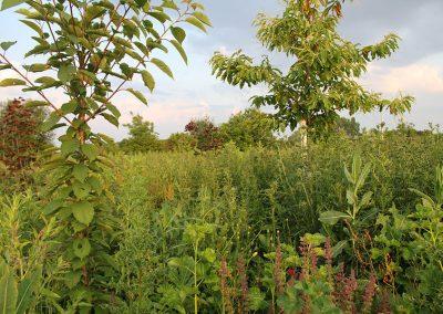 Permacultuur Magazine Artikel: Voedselbos als openbaar groen