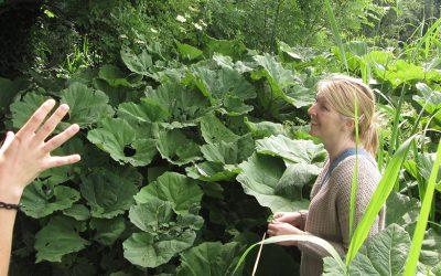 Green talk: urban herbology van lynn shore